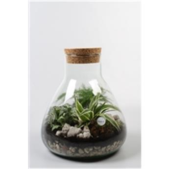 PLANTE VERTE D30 P Terrarium REF-90077 MIX