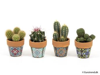 MINI CACTUS hybride D06C X12 Pot Ceramique MIX E5093