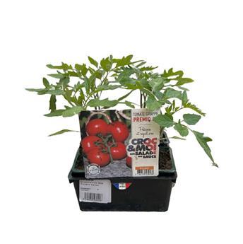 SOLANUM lycopersicum B06 Tomate Variee